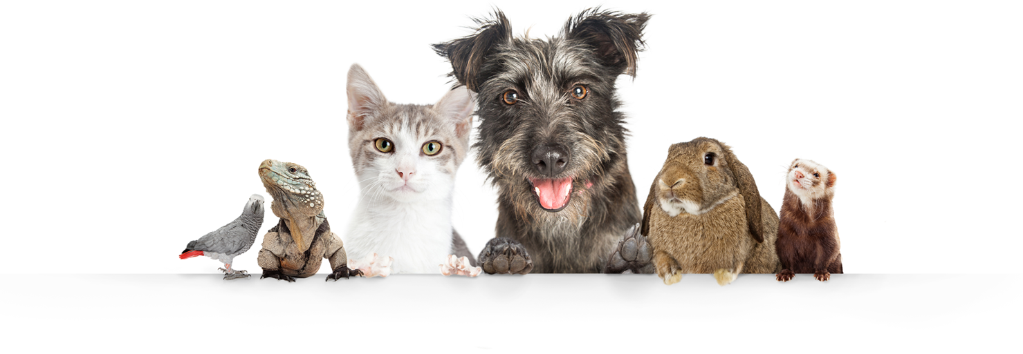 Pet team; bird, lizard, cat, dog, rabbit, ferret